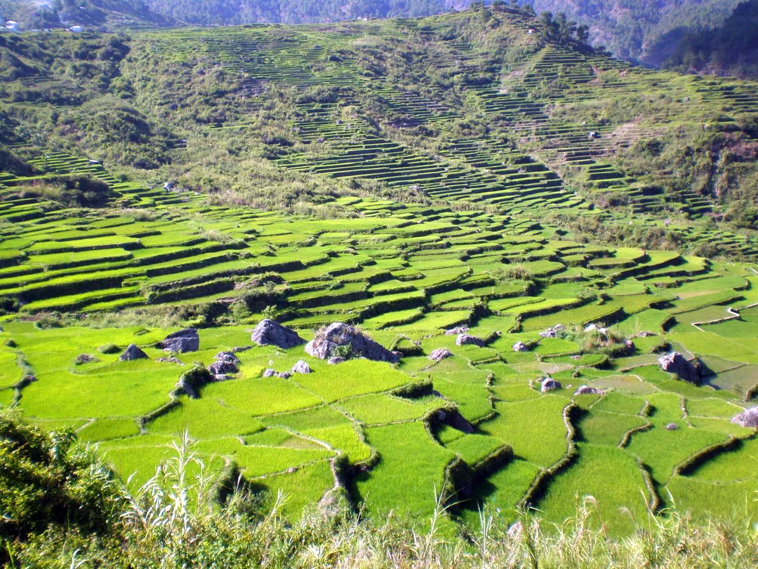 Cordillera_rice_terraces