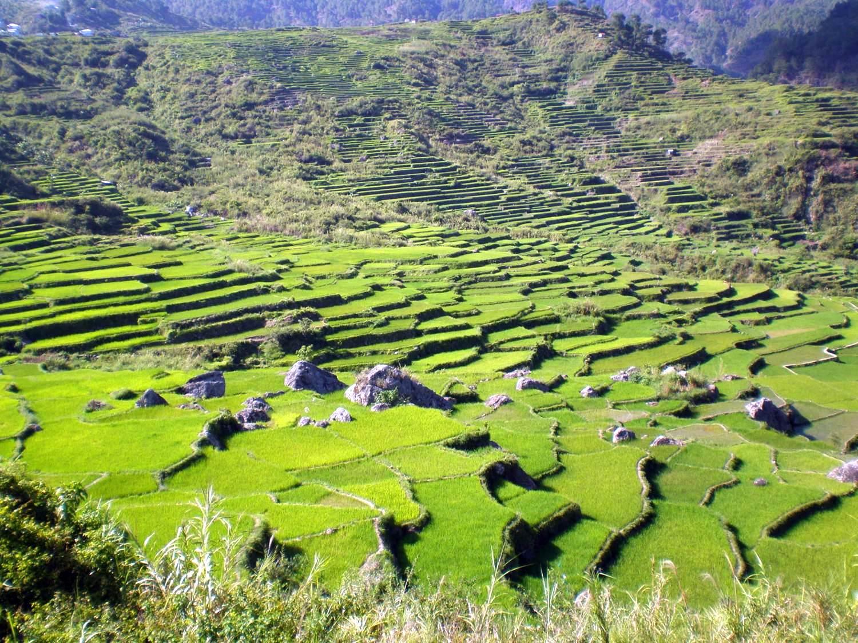 Cordillera_rice_terraces